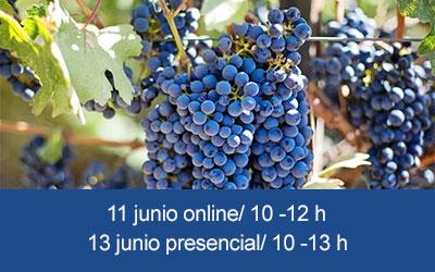 Taller semipresencial Conocer la oferta turística de la Ruta del Vino de Bullas